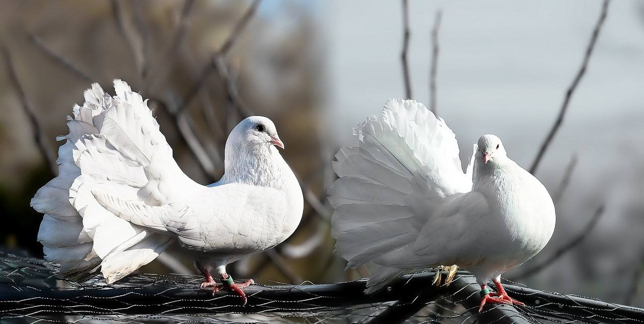 Disinfestazione piccioni: metodi di disinfestazione piccioni più diffusi