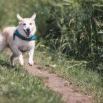 Accessori per cani: le pettorine